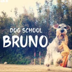 DOG SCHOOL BRUNO