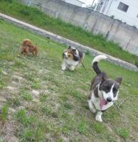 DogSchool vis-a-vis one