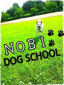 のび DOG SCHOOL2-200.jpg