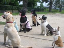 犬ドッグクラブ