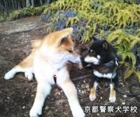 京都警察犬学校