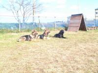 宮本愛犬訓練所