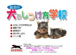 新潟インドア・ドッグ・トレーニングセンター 新潟市「犬のしつけ方学校」