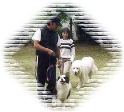 犬育て塾101ワンオーワン