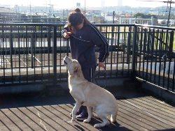 犬のしつけ出張訓練 Suzukiドッグトレーニング