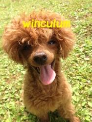 ワンちゃんの家庭教師Winculum(うぃんくるむ)